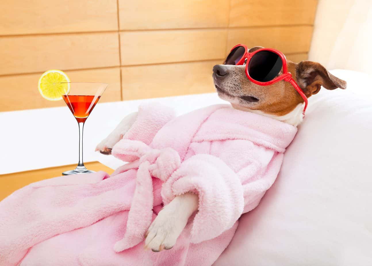 best-beds-for-jack-russell-terriers-jack-russell-sleeping