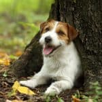 best-dog-crates-jack-russell-terrier